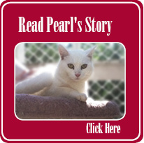 Pearls Story