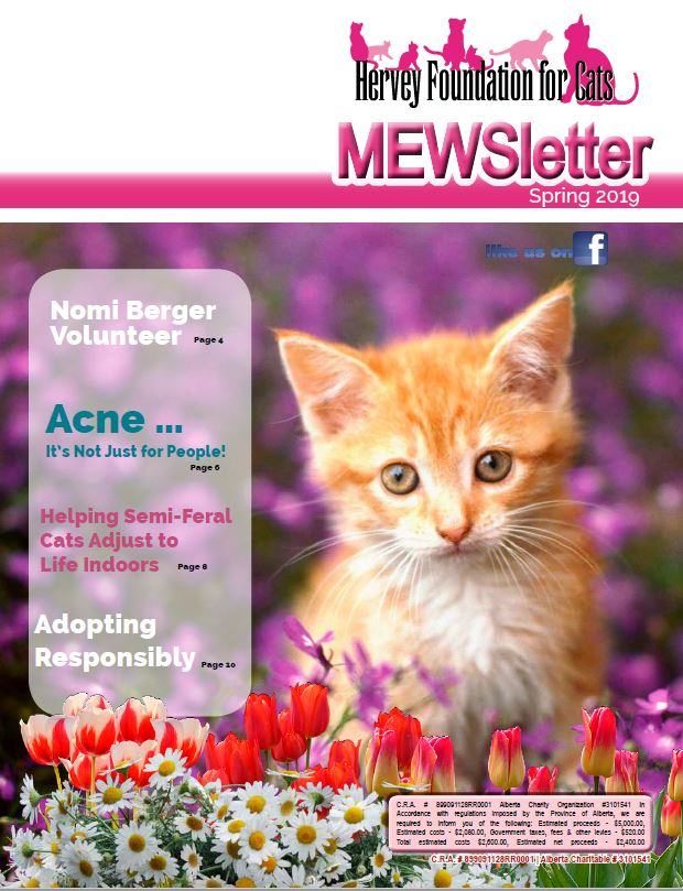 Spring 2019 Cat Newsletter PDF Edition
