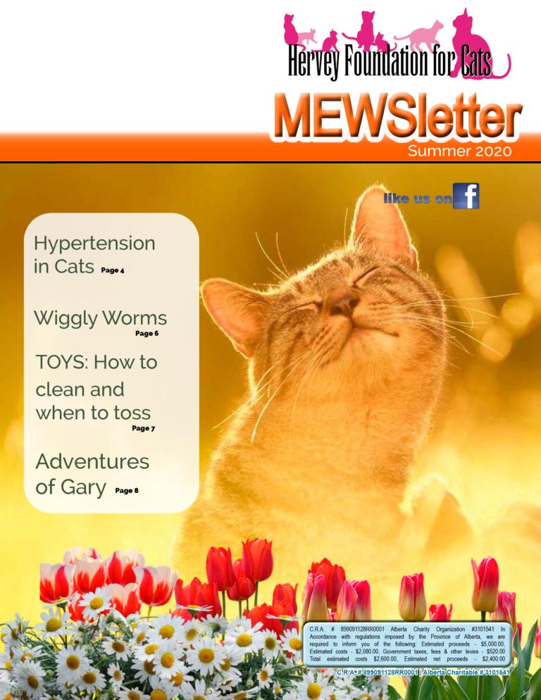 Summer 2020 newsletter cat