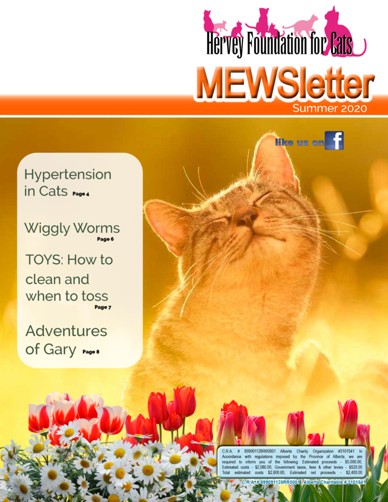 Summer 2020 newsletter cat