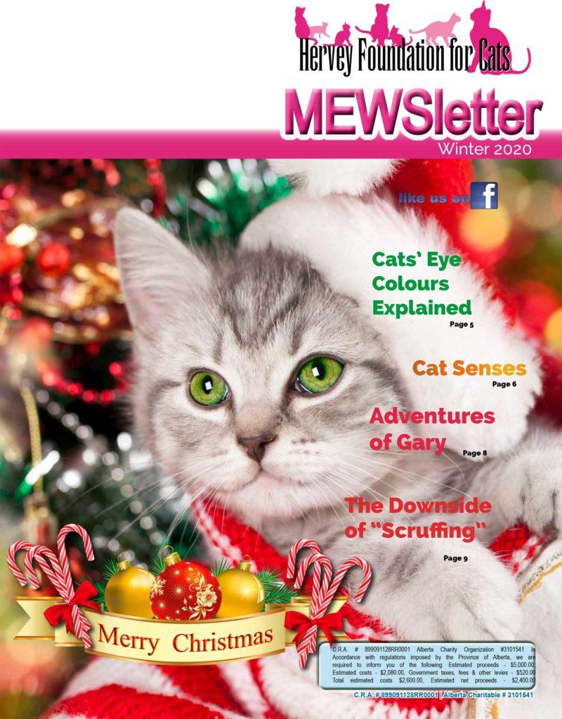 Winter 2020 Mewsletter