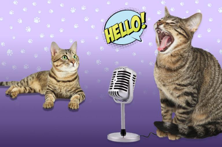 Cat communication graphic