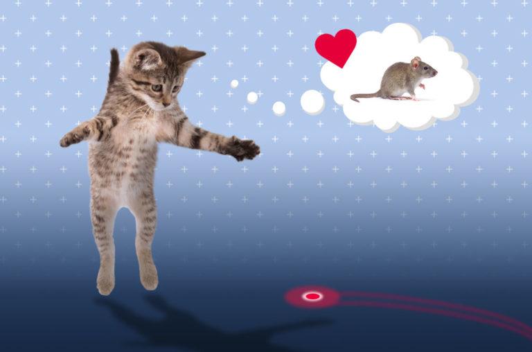 Laser cat graphic