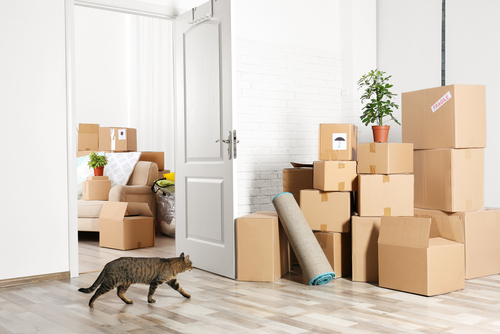 Boxes in room