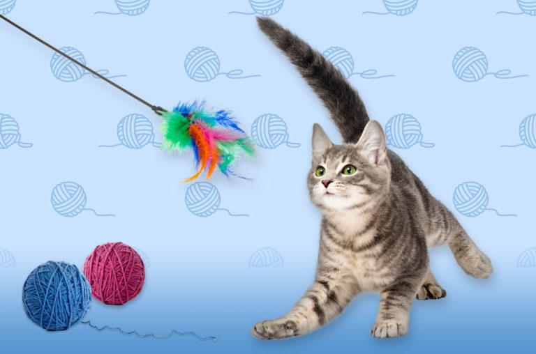 DIY cat toys graphic