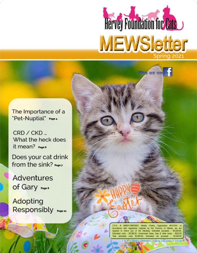 Spring 2021 Mewsletter